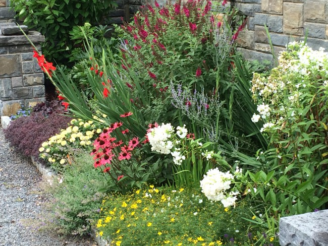 The Great Butterfly Bush Debate The Garden Diaries